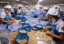 BIZ-MANUFACTURING:  HCM CITY –  Cashew factories shut down due to lack of nuts