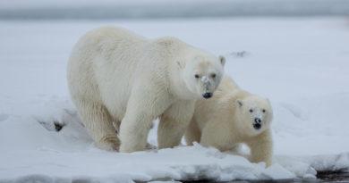 STOP GLOBAL WARMING !-ANIMAL & NATURE: Global Climate Change and Evolution