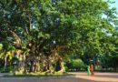 HEADLINE-ENVIRONMENT: Phú Hòa District  Phú Yên Province- Securing humanity's future, one tree at a time